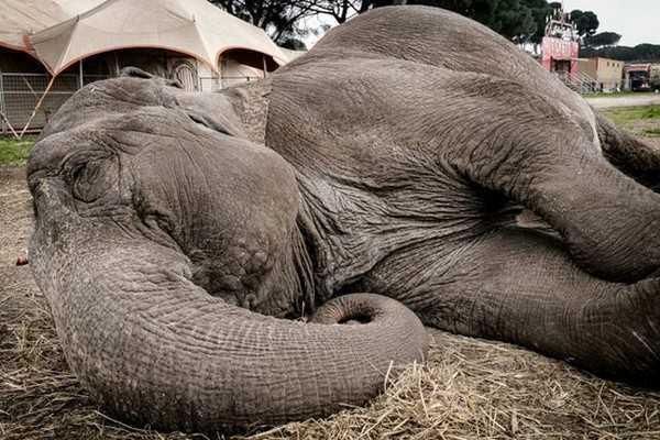 Sulla via Appia elefanti e dromedari danno spettacolo