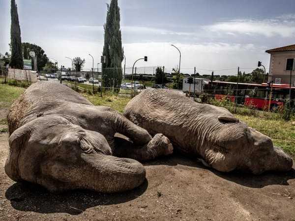 Roma: gli animali del circo invisibile