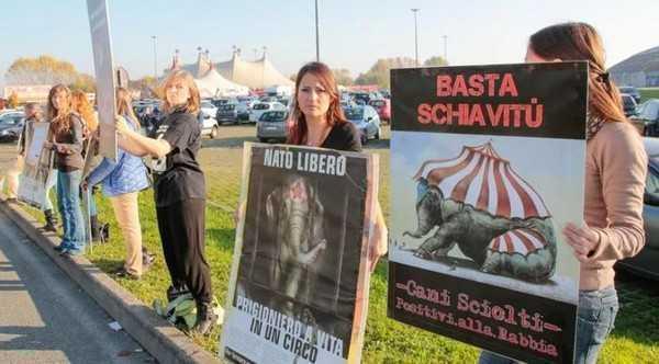 Novara norme rigide per il circo con animali