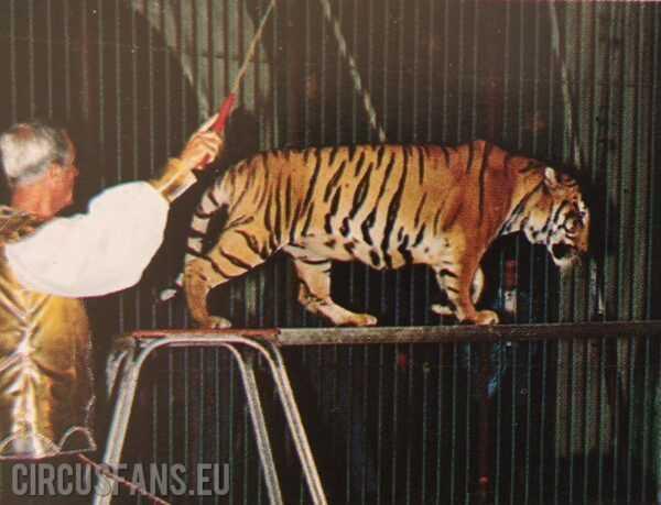 Circus Wegliams: le tigri di sandro la veglia