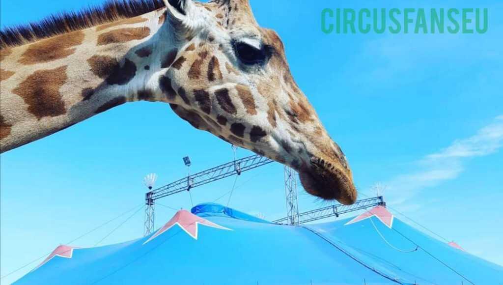 riapre il circo royal