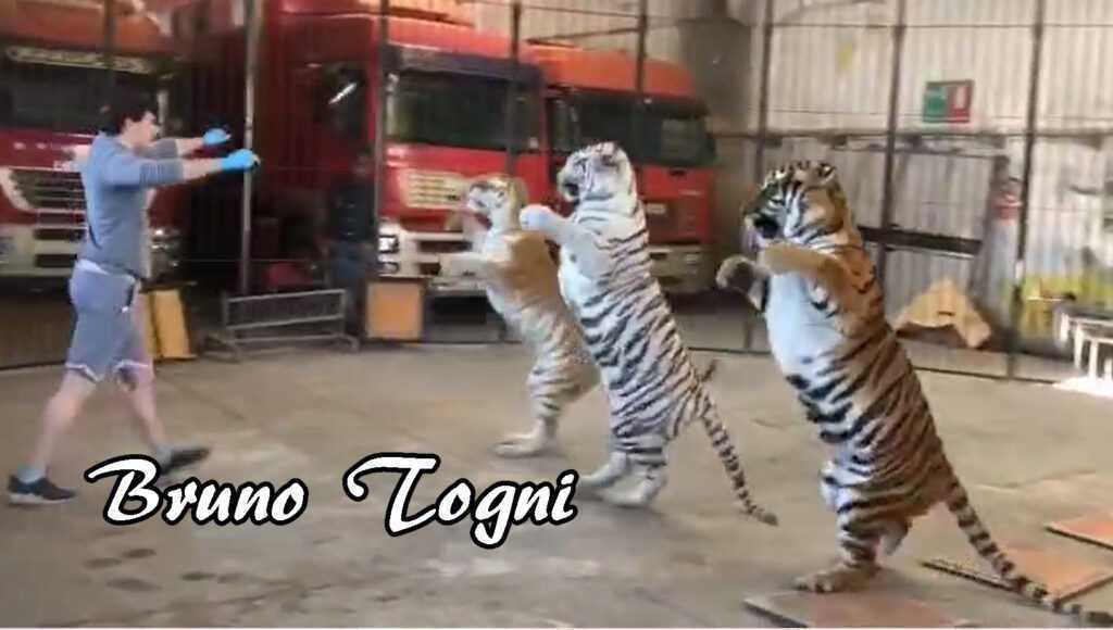 BRUNO TOGNI