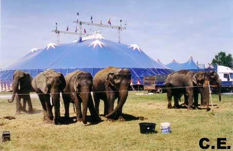 Il Circo Embell Riva