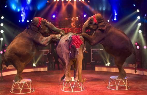 Elefanti di Davio Casartelli