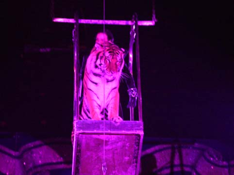 Le Tigri di Stefano