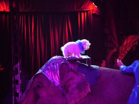 Tyson sull' elefante