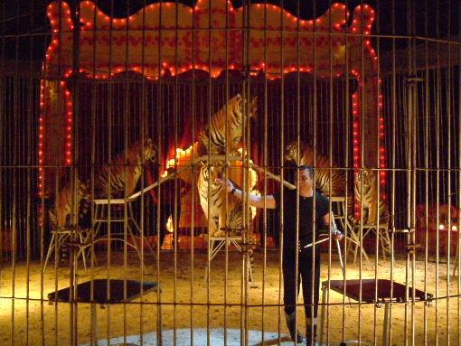 Il debutto del nuovo numero con 6 tigri (Foto M. Colombo)