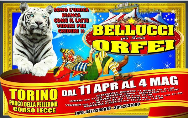 https://www.circusfans.eu/wp-content/uploads/backup/images_bellucci2014torino.jpg