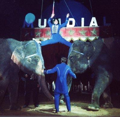 Gli elefanti del Circo Mundial (Spagna)